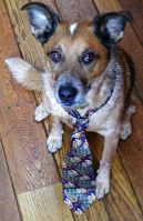Dog wearing a tie.