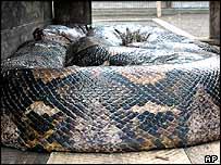snake203ap.jpg